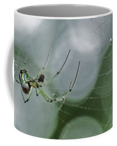 Insect Coffee Mug featuring the photograph Venusta Orchard Spider by Donna Brown