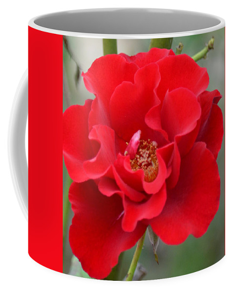 Vibrantly Red Rose Coffee Mug featuring the photograph Vibrantly Red Rose by Maria Urso