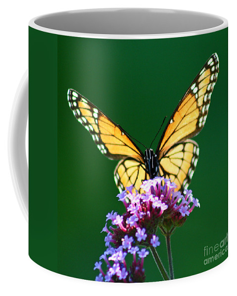Butterfly Coffee Mug featuring the photograph Viceroy Butterfly Square by Karen Adams