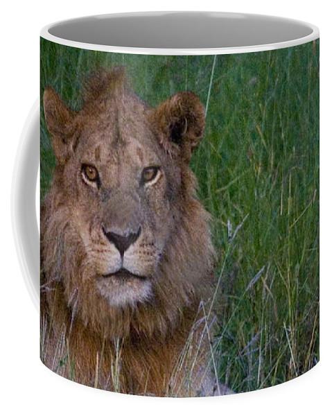 Panthera Leo; Lion; Serengeti; Tanzania; Africa. Coffee Mug featuring the photograph Vigilant Lion by J L Woody Wooden