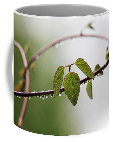 Vines Coffee Mug featuring the photograph Vine With Raindrops by Trina Ansel