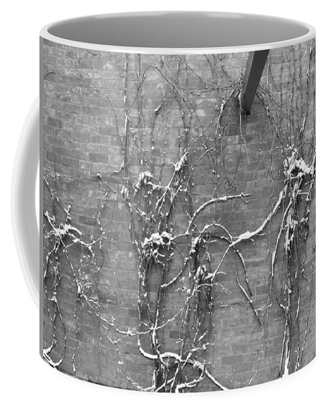 Black And White Coffee Mug featuring the photograph Vines After Snow In Black And White by Katie Beougher