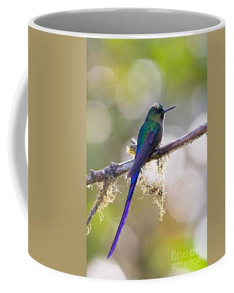 Animal Coffee Mug featuring the photograph Violet-tailed Sylph by Jean-Luc Baron