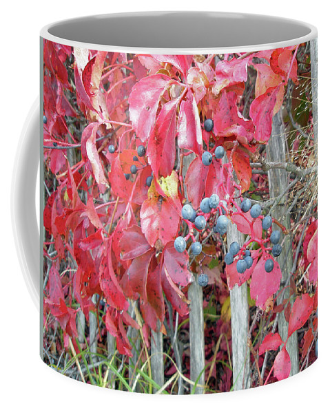 Foliage Coffee Mug featuring the photograph Virginia Creeper Fall Leaves And Berries by Mother Nature