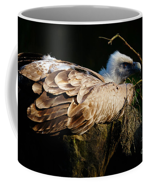Vulture Coffee Mug featuring the photograph Vulture Resting In The Sun by Nick Biemans