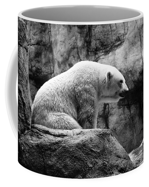 Polar Bear Coffee Mug featuring the photograph Waiting For Winter by Bill Pevlor