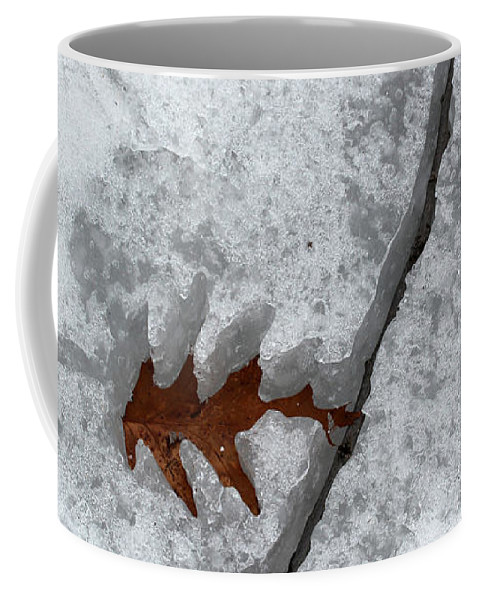 Leaf Coffee Mug featuring the photograph Waiting To Be Free 1 by Mary Bedy