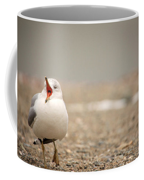 Ring-billed Gull Coffee Mug featuring the photograph Walking And Talking by Karol Livote