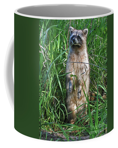 Raccoon Coffee Mug featuring the photograph Wary by Ann Horn