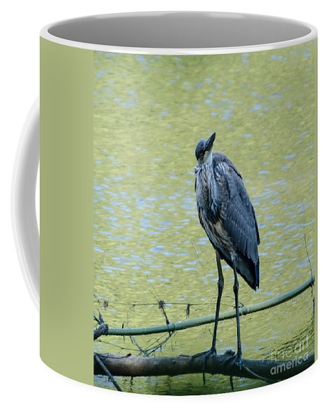 Bird Coffee Mug featuring the photograph Watching Me Watching You by Donna Brown