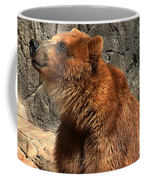 Bear Coffee Mug featuring the photograph Watching The Sun Set by RC DeWinter