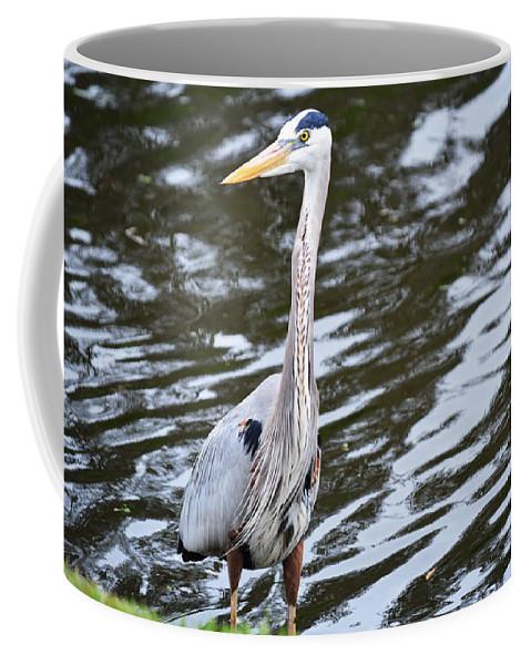 Florida Coffee Mug featuring the photograph Water Bird by Linda Kerkau