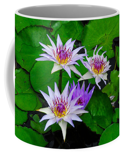 Floral Coffee Mug featuring the photograph Water Lily IIi by David Mortenson