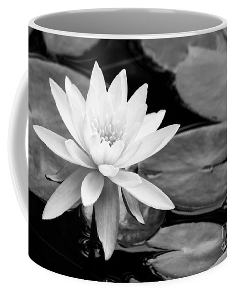Landscape Coffee Mug featuring the photograph Water Lily In The Lily Pond by Sabrina L Ryan