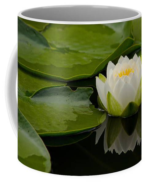 Water Coffee Mug featuring the photograph Water Lily Reflection II by Jordan Blackstone