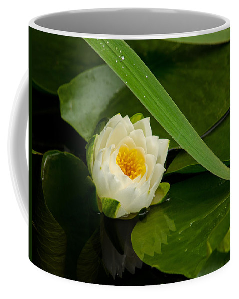 Water Coffee Mug featuring the photograph Water Lily Reflection by Jordan Blackstone