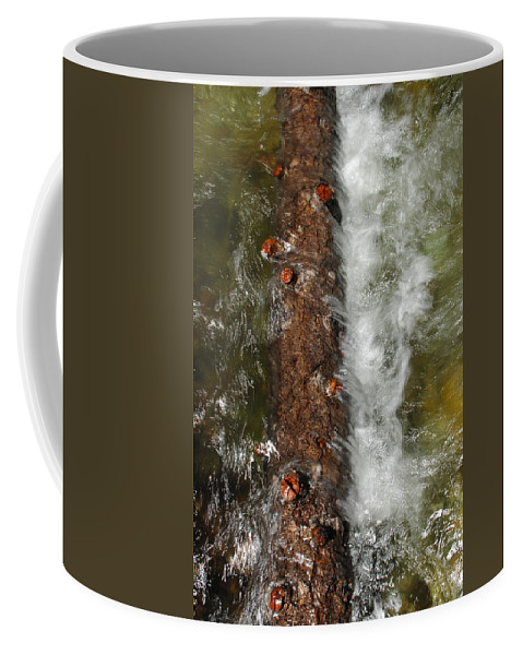 Water Coffee Mug featuring the photograph Water Logged by Donna Blackhall