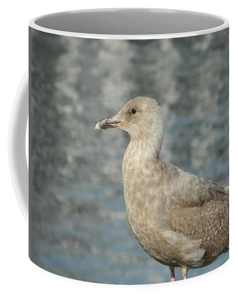 Seagull Coffee Mug featuring the photograph Waterfront Seagull by Nicki Bennett