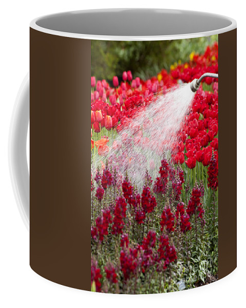 Snapdragon Coffee Mug featuring the photograph Watering The Garden by Anthony Totah