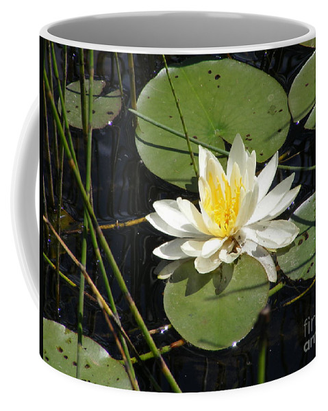 Vermont Coffee Mug featuring the photograph Waterlily by Susan Russo