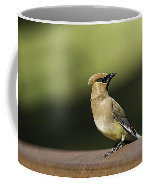 Cedar Waxwing Coffee Mug featuring the photograph Waxwing At The Park by Thomas Young