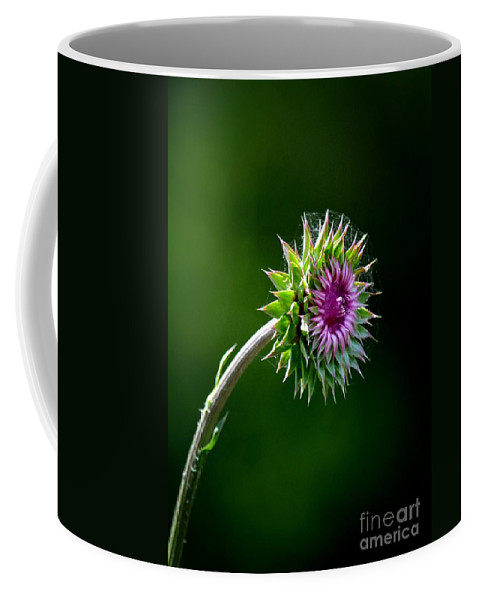 Webbed Thistle Coffee Mug featuring the photograph Webbed Thistle by Maria Urso