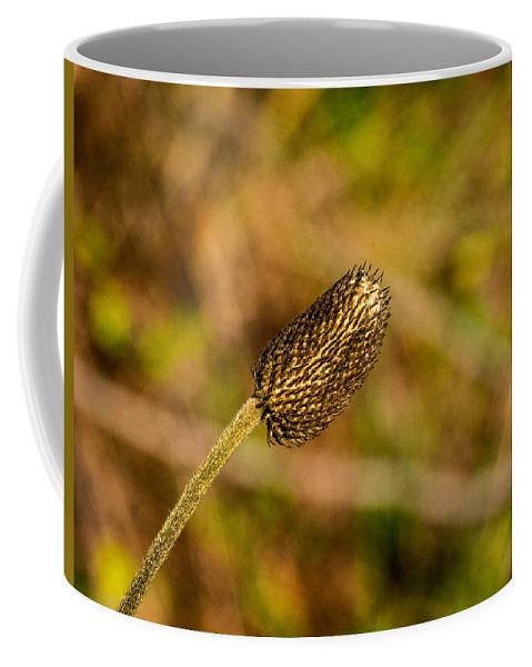 Weed Coffee Mug featuring the photograph Weed Seed Head by Douglas Barnett