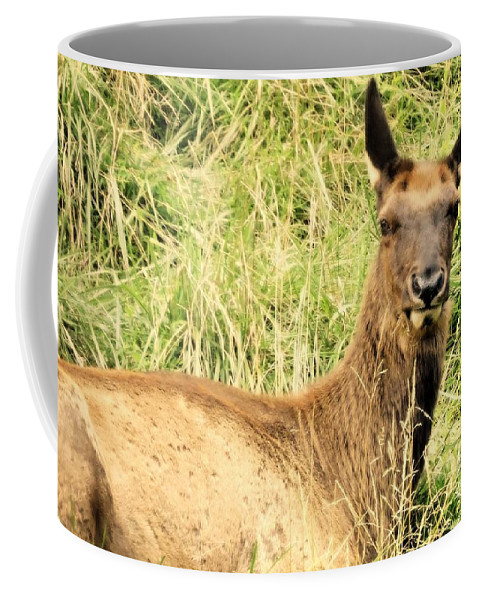 Elk Coffee Mug featuring the photograph Welcome To My World by Tami Quigley