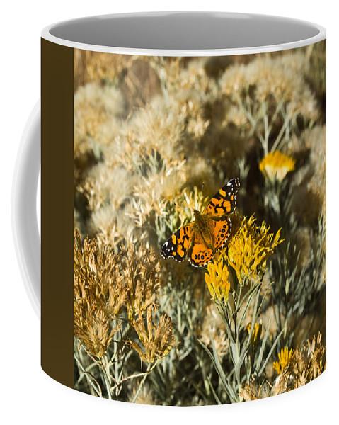 West Coffee Mug featuring the photograph West Goast Lady Vanessa Annabella 2 by Douglas Barnett