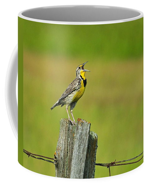 Western Meadowlark Coffee Mug featuring the photograph Western Meadowlark by Tony Beck