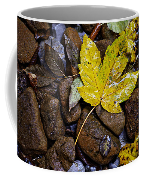 Nature Coffee Mug featuring the photograph Wet Autumn Leaf On Stones by Ivan Slosar