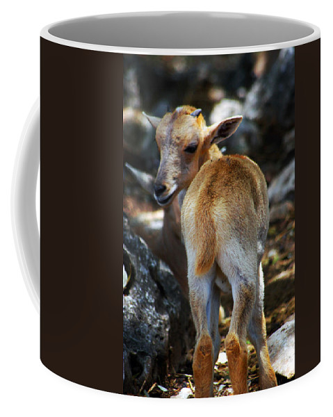 Fawn Coffee Mug featuring the photograph What by John Dauer