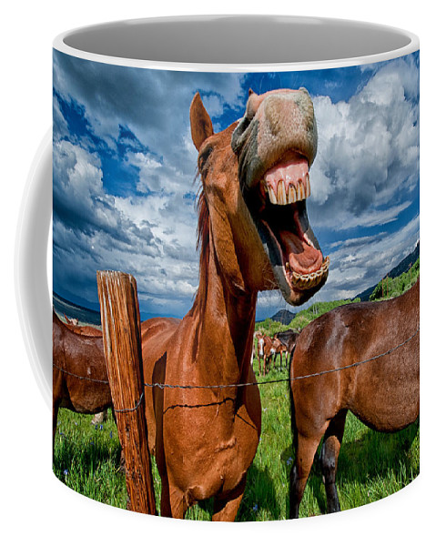 Horse Mule Teeth Funny Laugh Animal Equine California Blue Sky Cloudy Grass Green Mouth Cowboy Day Coffee Mug featuring the photograph What's So Funny by Cat Connor