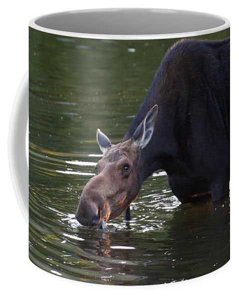 Moose Coffee Mug featuring the photograph Whats Up by Glenn Gordon