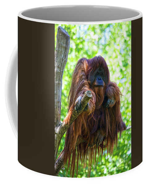 Orang Untang Coffee Mug featuring the photograph What's Up by Heiko Koehrer-Wagner