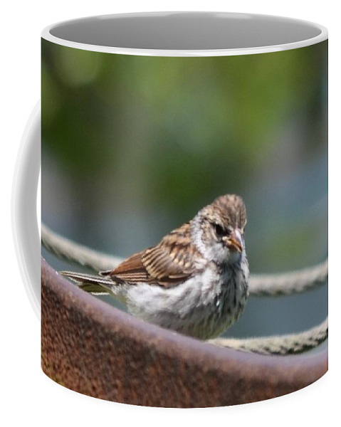 Whats Up Coffee Mug featuring the photograph What's Up by Maria Urso