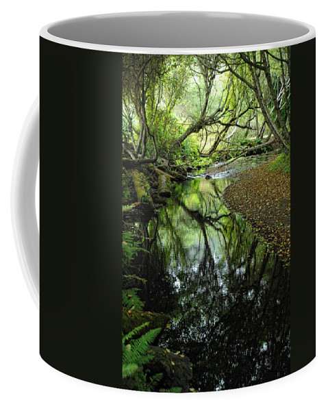Forest Coffee Mug featuring the photograph Where Magic Happens by Donna Blackhall