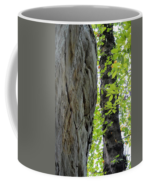 Wherer The Tree Meets The Stone Coffee Mug featuring the photograph Where The Tree Meets The Stone by Maria Urso