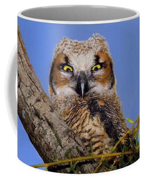 Bird Coffee Mug featuring the photograph Where'd Ya Get Those Peepers by John Absher