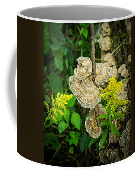 Bracket Coffee Mug featuring the photograph Whirled Turkey Fungus by Douglas Barnett