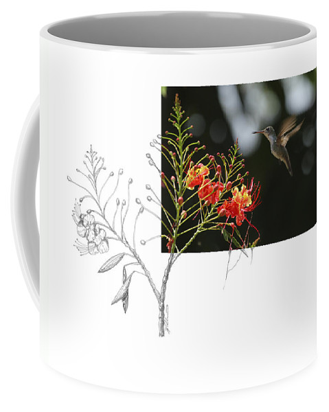 White-bellied Emerald Coffee Mug featuring the photograph White-bellied Emerald by Andrew McInnes