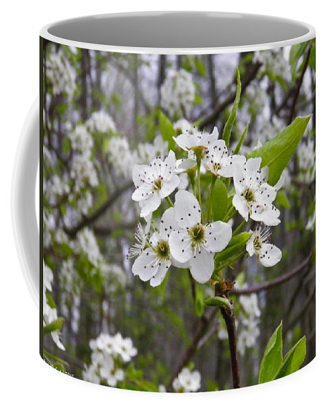 Tree Coffee Mug featuring the photograph White Blooms by Nick Kirby