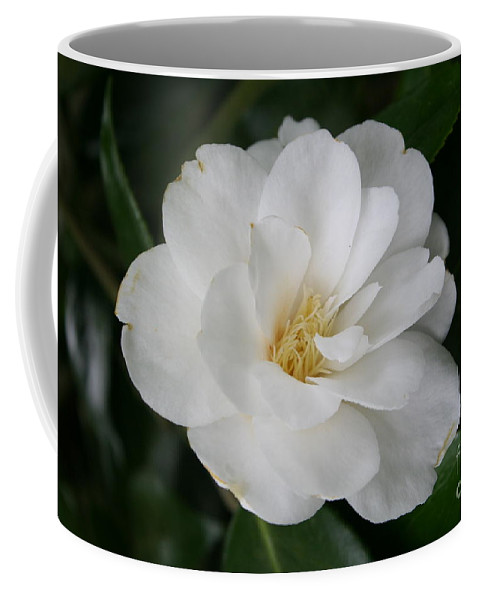 White Camellia Coffee Mug featuring the photograph Snow White Camellia by Christiane Schulze Art And Photography