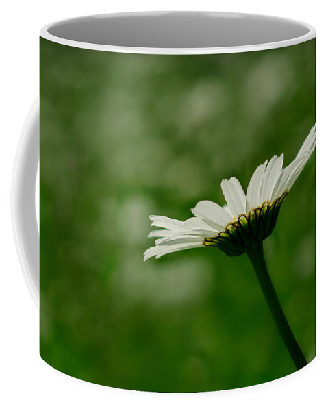 Flower Coffee Mug featuring the photograph White Daisy by TouTouke A Y
