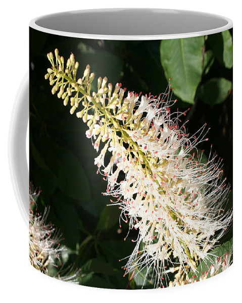 White Flowers Coffee Mug featuring the photograph White Flower Panicle by Christiane Schulze Art And Photography