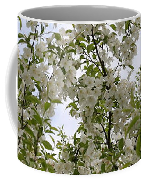 Flower Coffee Mug featuring the photograph White Flowers On Branches by Michelle Miron-Rebbe