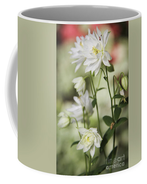Columbine Coffee Mug featuring the photograph White Frilly Columbines by Teresa Mucha