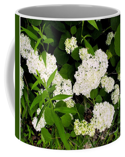 White Hydrangia Coffee Mug featuring the photograph White Hydrangia Beauty by Kendall Kessler