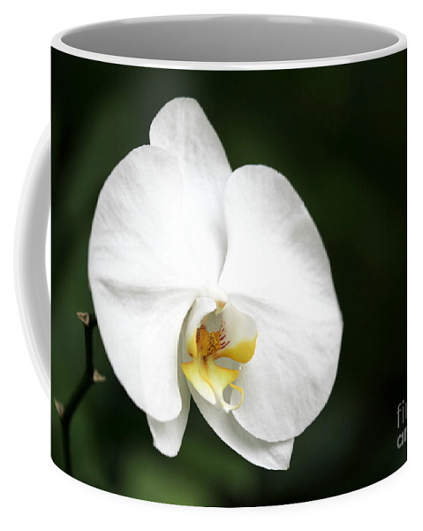 American Coffee Mug featuring the photograph White Light by Sabrina L Ryan