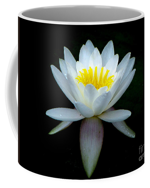 White Coffee Mug featuring the photograph White Lotus by Charlene Gauld